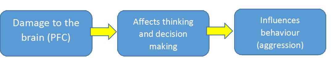 Relationship Chain 2 Brain, Thinking and Behaviour