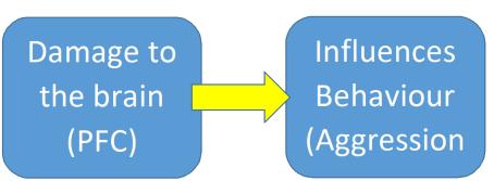 Relationship Chain Brain and Behaviour